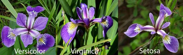 Classifying Species of Iris Flowers | Kaggle